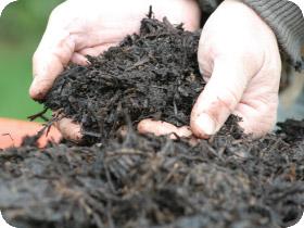 mint-compost